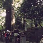 高尾登山1号路 たこ杉