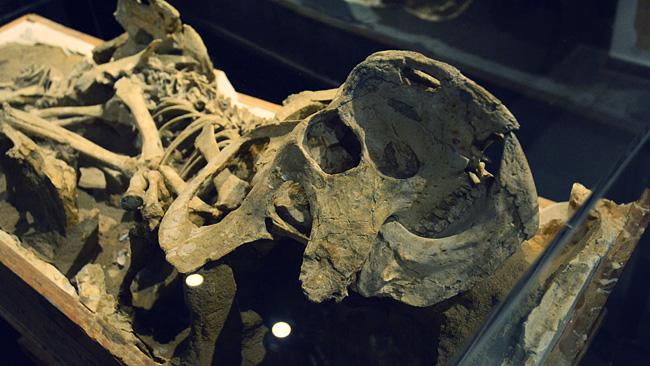 プロトケラトプス