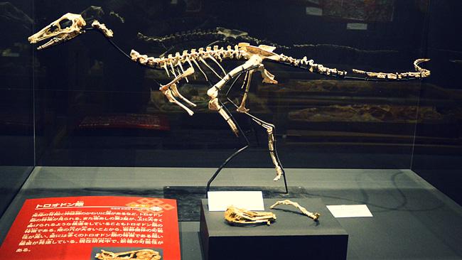 ゴビベナトル・モンゴリエンシス(モンゴル・ゴビの狩猟者)