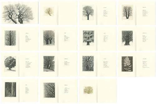 木村茂 銅版画集 樹