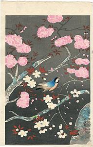 桜と小鳥(仮題) / 大野麥風