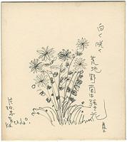 自筆色紙 白く咲く荒地野菊は強き花 / 片柳忠男