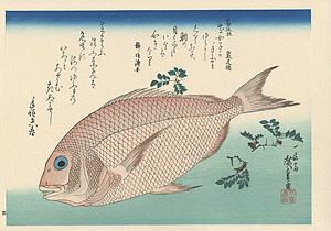 魚づくし 鯛に山椒 【復刻版】 / 広重初代