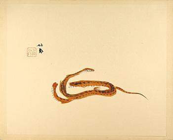 蟠蛇 / 竹内栖鳳