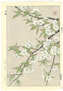 山桜 / 河原崎奨堂