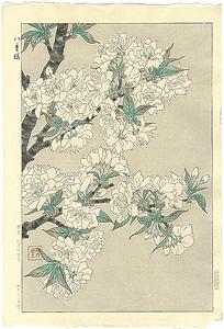 八重桜 / 河原崎奨堂