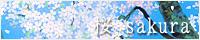 桜 sakura 特集