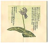 閑中閑本 第拾九冊 山野雑草帖 / 前川千帆