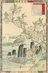 楳嶺花鳥画譜 桜と鴎 / 楳嶺