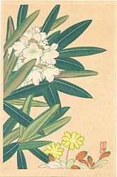 高山植物図譜 シロバナシャクナゲ・チョウノスケソウ / 井上正晴