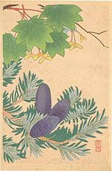 高山植物図譜 キバナハウチワカエデ・ウラジロモミ / 井上正晴