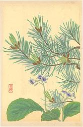 高山植物図譜 イワタバコ・ハイマツ / 井上正晴