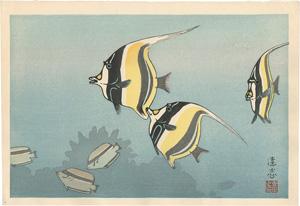ハワイの魚 B / 吉田遠志