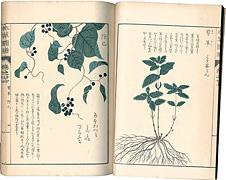 本草図譜 巻之廿七 蔓草類六 / 岩崎灌園