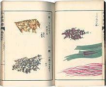 本草図譜 巻之五十一 菜部水菜類 / 岩崎灌園