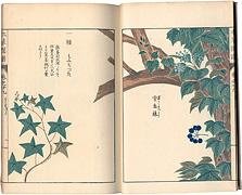 本草図譜 巻之廿九 蔓草類八 / 岩崎灌園