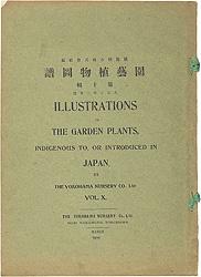 園芸植物図譜 第十輯 西洋水仙 / 横浜植木株式会社編