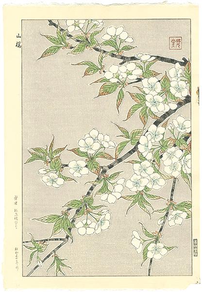 河原崎奨堂「山桜」/