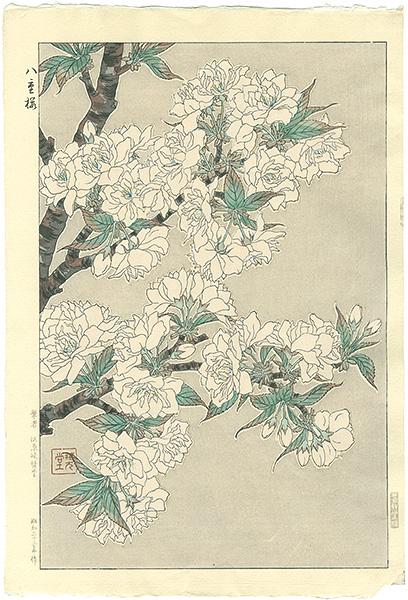 河原崎奨堂「八重桜」/