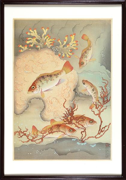 大野麥風「大日本魚類画集 メバル」/