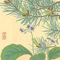 井上正晴「高山植物図譜 イワタバコ・ハイマツ」