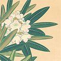 井上正晴「高山植物図譜 シロバナシャクナゲ・チョウノスケソウ」