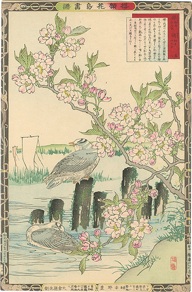 楳嶺「楳嶺花鳥画譜 桜と鴎」/