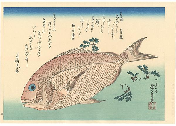 広重初代「魚づくし 鯛に山椒【復刻版】」/