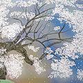 中島千波「醍醐桜」
